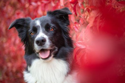 Psí fotograf Radek Vandra Photography - Fotografování psů