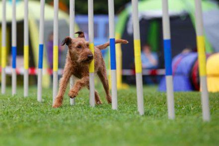 Psí fotograf Radek Vandra Photography - Fotografování psů - Psí sporty